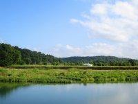 Widok na zielone tereny